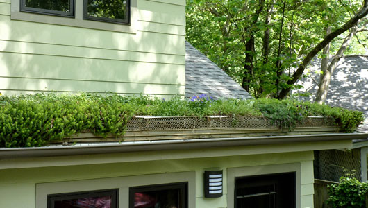 Urban DIY: How to install a green roof