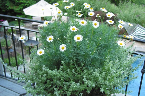 Urban Plantscapes Exterior Planter